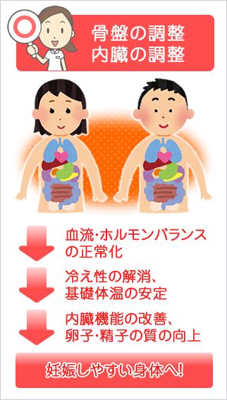 骨盤の調整・内臓の調整→血流・ホルモンバランスの正常化→冷え性の解消、基礎体温の安定→内臓機能の改善、卵子・精子の質の向上→妊娠しやすい身体へ!